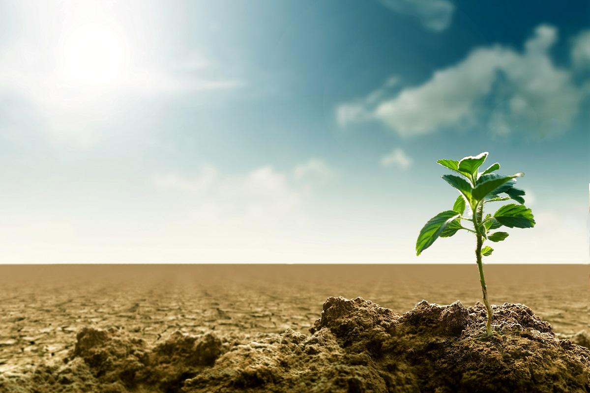 القطاع البيئي والزراعي